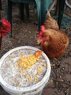 chicken-cheese-2